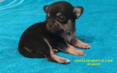 chicca2
