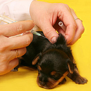 vaccino-cane-300x300
