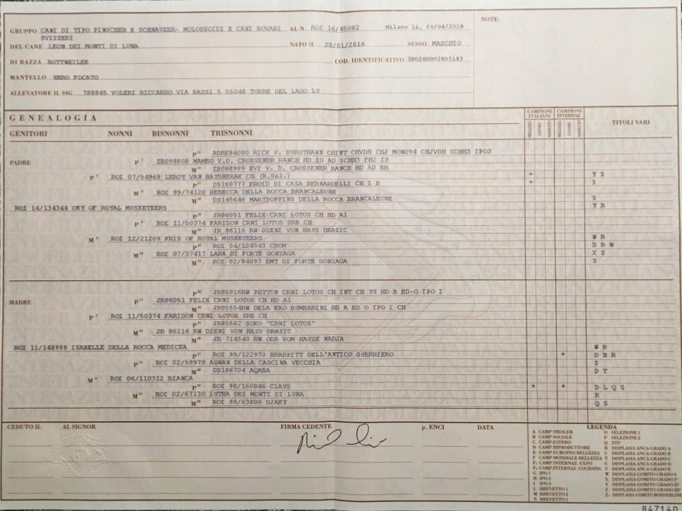 certificato-leon