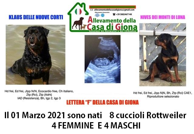01/03/2021  SONO NATI 8 CUCCIOLI ROTTWEILER DI KLAUS E NIVES